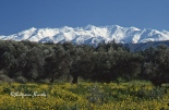 Snow capped mountains and olive grove on the island of Crete