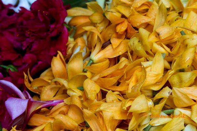 Kantil Cempaca flowers sold in Badung market Denpasar