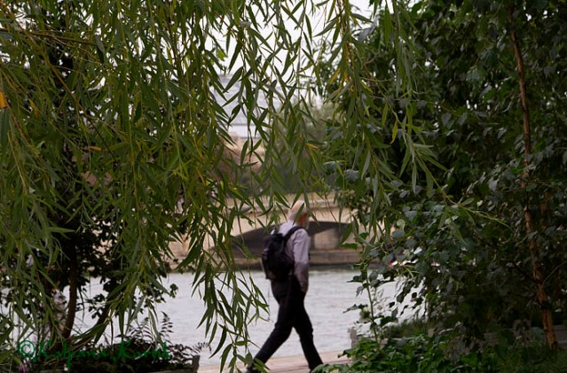 Greenery along the banks of the Seine river