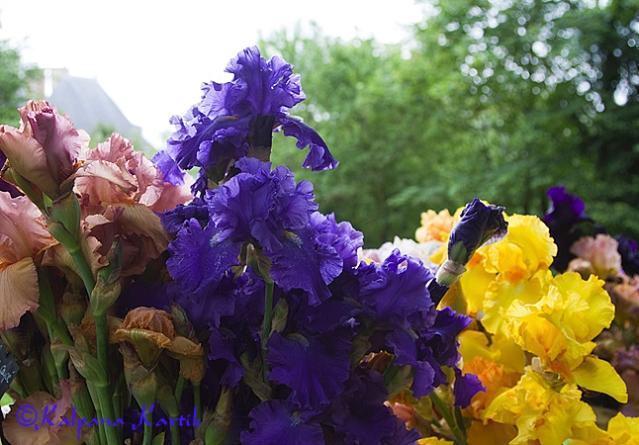 "The floral art show ""Irisiades"" in Auvers sur Oise castle"