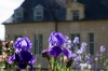 "The floral art show ""Irisiades"" in Auvers sur Oise castle"