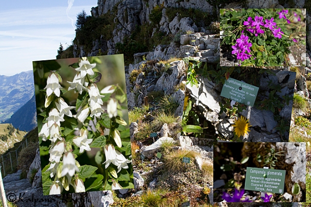 The alpine rock garden