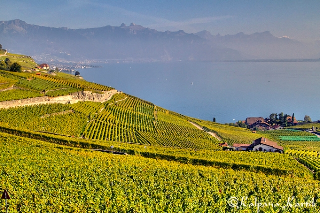 Lavaux vineyards along Lake Geneva