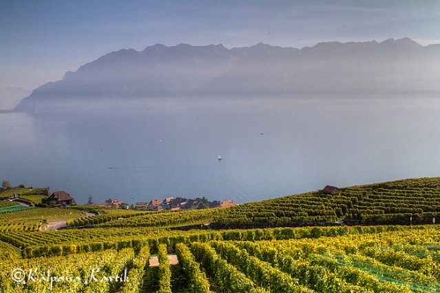 The vineyards in Lavaux