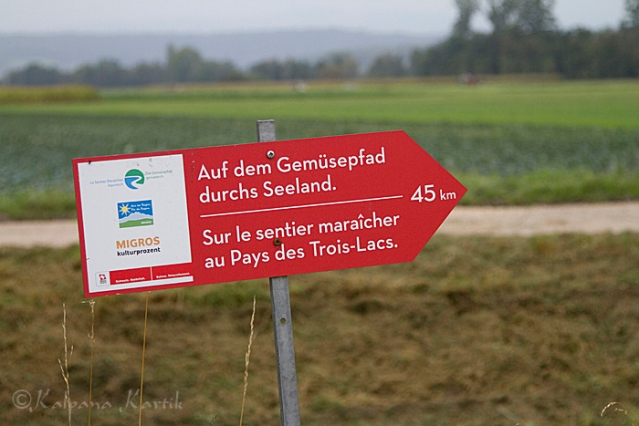 The red signboard placed along the vegetable path