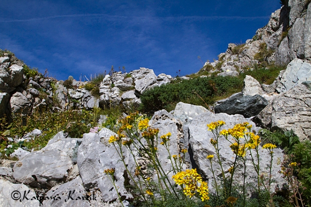 Beautiful alpine garden of Rochers de Naye