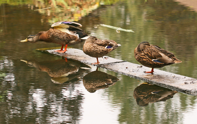 Pond Dwellers………..