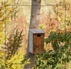 Wood duck nesting box attached on to a tree close to pond