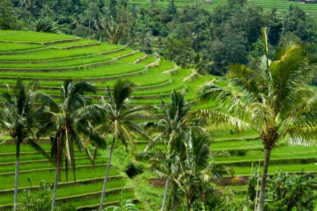 Bali, isle ofheavens