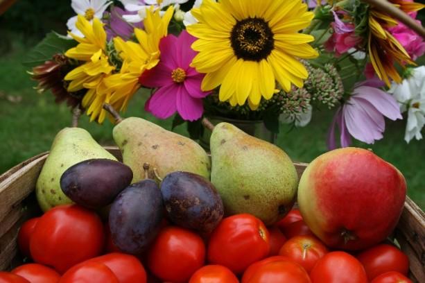 summer harvest 1