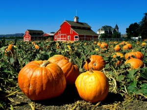 pumpkin_patch-1024x768