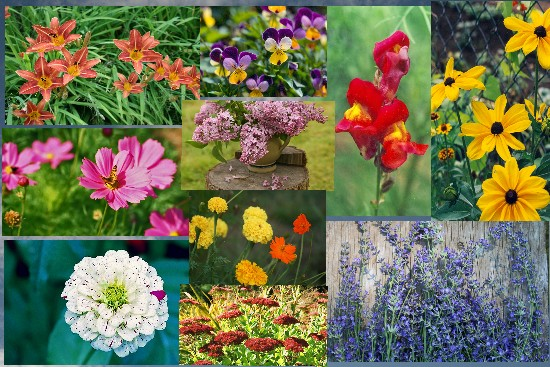 Flowers to convey yourfeelings